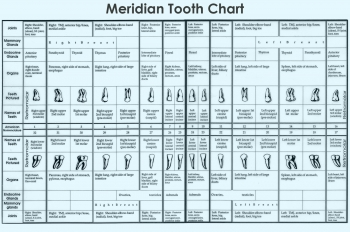 Meridian Tooth Chart